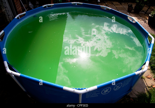 Stagnant Water With Algae Stock Photos Stagnant Water With Algae Stock Images Alamy