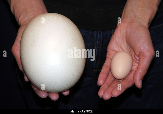 Ostrich Egg And Chicken Egg Stock Photos & Ostrich Egg And Chicken ...