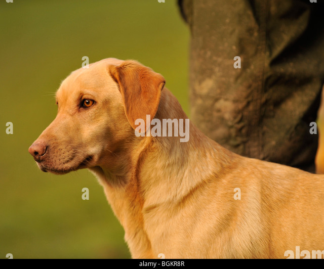 Andrex Stock Photos Amp Andrex Stock Images Alamy