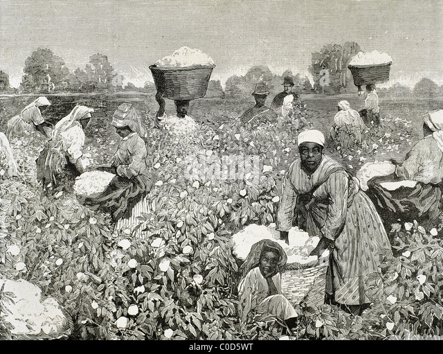 Southern Cotton Plantations 1800s | www.pixshark.com ...  Cotton Plantations 1800s