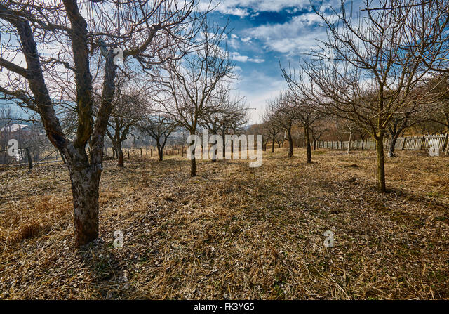 Plowed field fence stock photos plowed field fence stock images alamy - Spring trimming orchard trees healthy ...