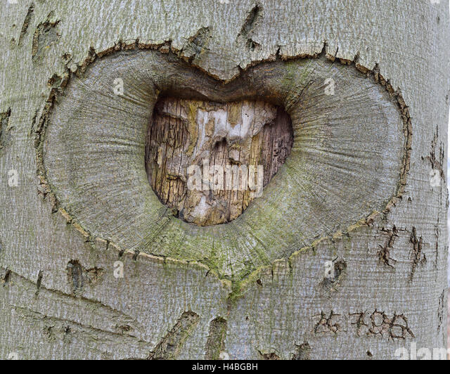 What is a tree trunk covered with 4 letters tree stump for What is a tree trunk covered with 4 letters