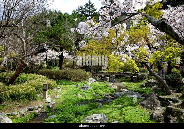 Maruyama Park Blossom Stock Photos & Maruyama Park Blossom Stock Images -...