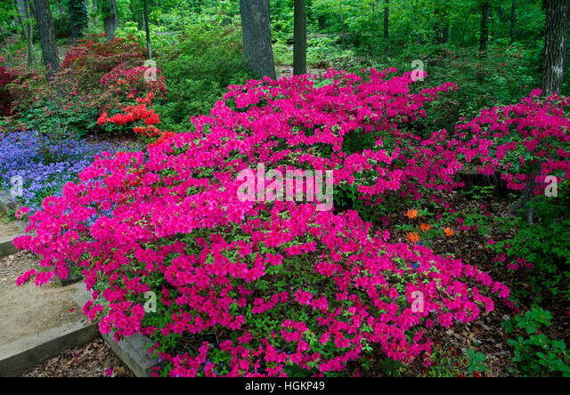 shade loving stock photos  shade loving stock images  alamy, Natural flower