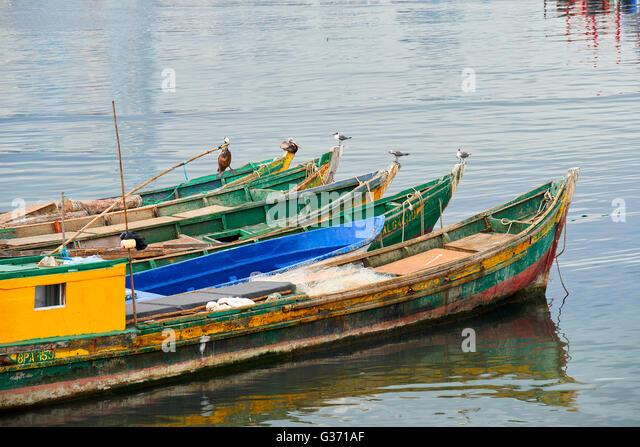 Panama birds stock photos panama birds stock images alamy for Panama city beach party boat fishing