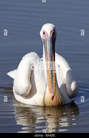 pelican lake senior singles N golden age club card games, 12:30 pm, bingo from 1 to 4 pm, klamath basin senior citizens center, 2045 arthur st.