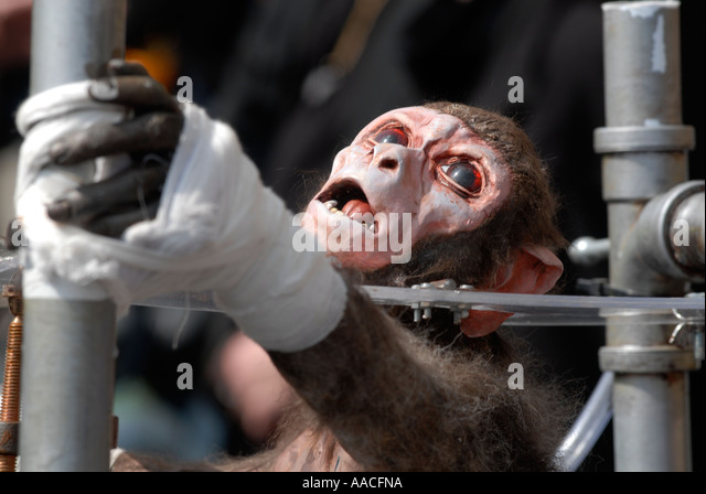 animal testing behind the experiments Animal testing in medical experiments  a law – section 24 of the animals ( scientific procedures) act 1986 – allows vivisectors to hide behind a veil of  secrecy.