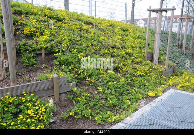hanggarten waldsteinia stock image gestalten ideen