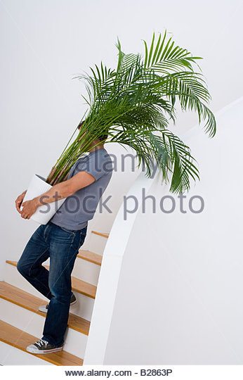 Young Man With Plant On Stairs   Stock Image