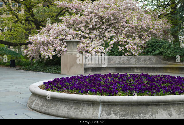 Viola Cultivar Stock Photos Viola Cultivar Stock Images Alamy