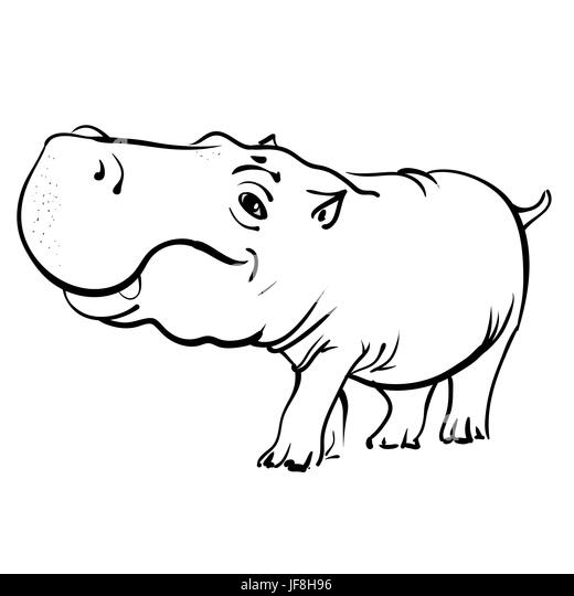 Cartoon Hippopotamus Isolated On White Background Fat Hippo