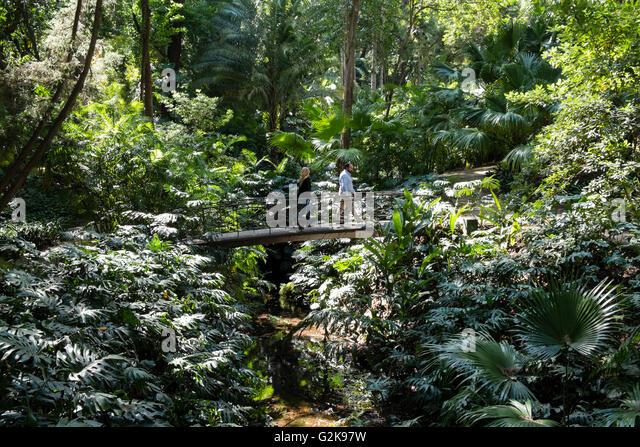 Monstera deliciosa stock photos monstera deliciosa stock for Bodas jardin botanico malaga