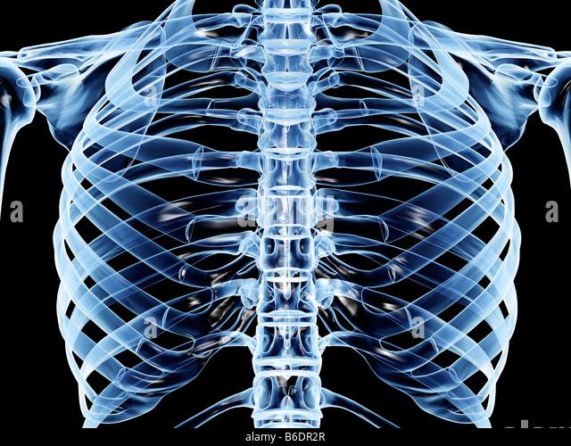 rib cage illustration stock photos & rib cage illustration stock, Skeleton