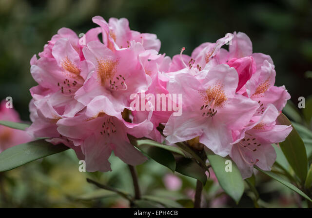 rhododendron muslim single men Women seeking men in hood river, or (1 62 yr old women seek men rhododendron, or i am thankful everyday tools single.