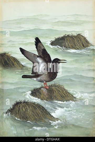 ichthyornis dispar cretaceous bird stock image