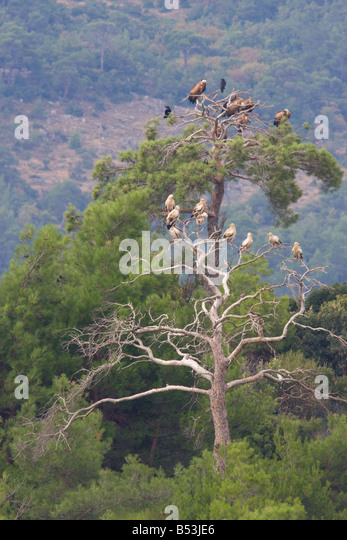 Vultures Stock Photos & Vultures Stock Images - Alamy