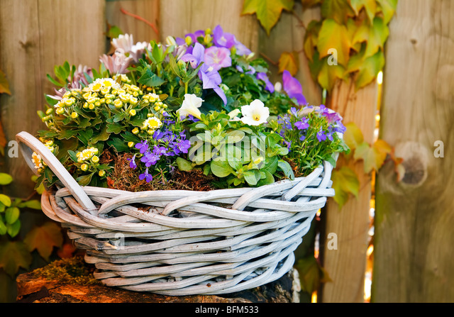 Purple Violet And White Flowers In A Lovely Basket In The Garden   Stock  Image
