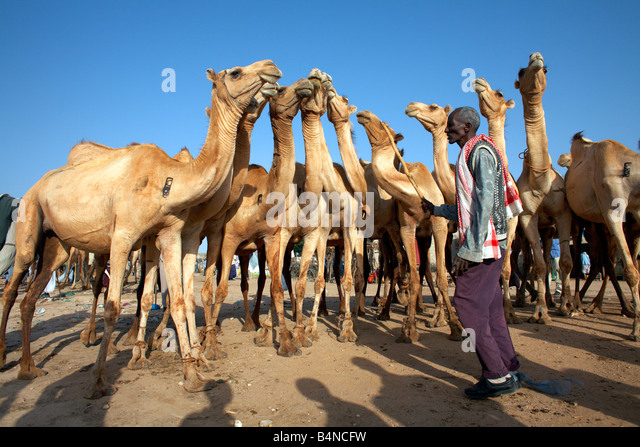 29 best hargeisa style somaliland images on Pinterest