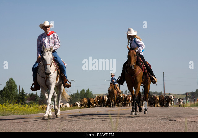 Cattle Drive Stock Photos Amp Cattle Drive Stock Images Alamy