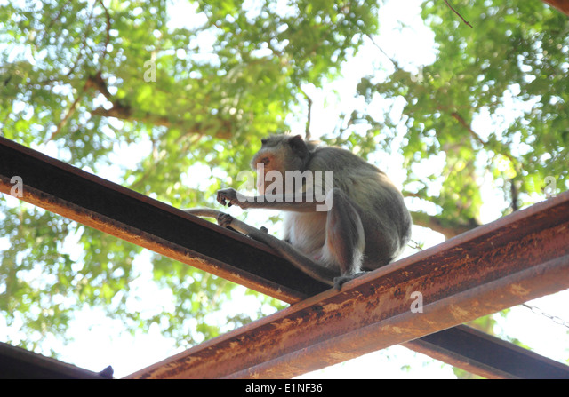 image Barking at the ape washing