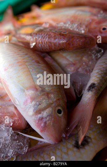 Philippines fish market stock photos philippines fish for Nearest fresh fish market