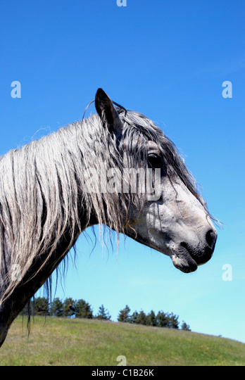 Dirty Horse Stock Photos &- Dirty Horse Stock Images - Alamy