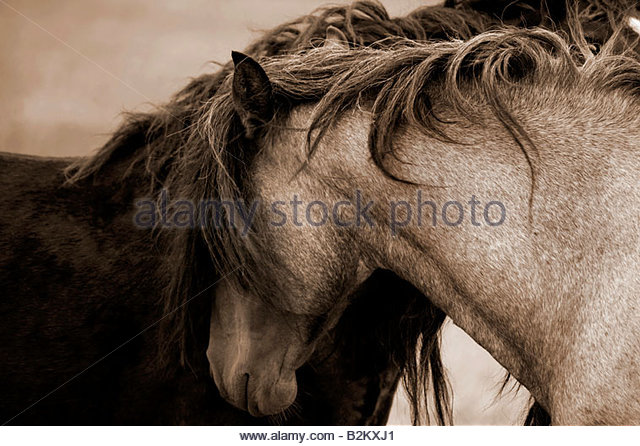 long manes stock photos - photo #10