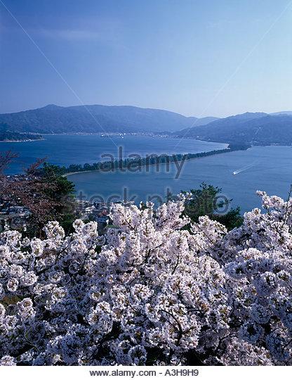 Miyazu Japan  City new picture : Cherry Blossoms Amanohashidate Miyazu Kyoto Japan Blue sky Mountain ...