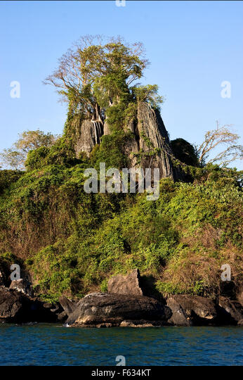 rock stone branch - photo #6