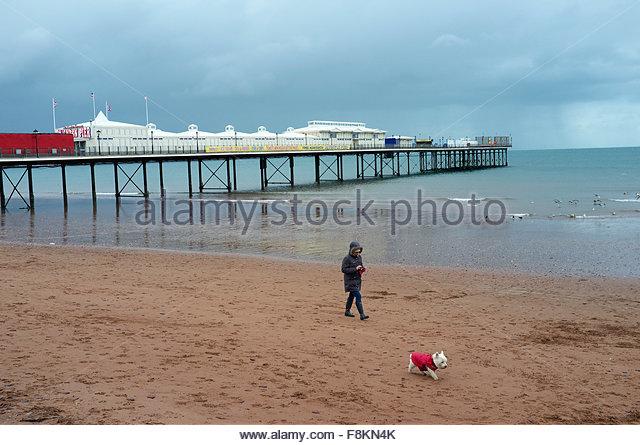Dog Walking Teignmouth Town Beach