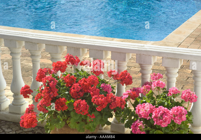 geraniums in pots by poolside stock image
