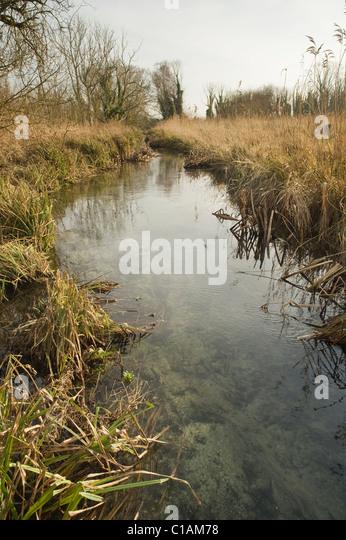 Beaver management stock photos beaver management stock for Castor habitat
