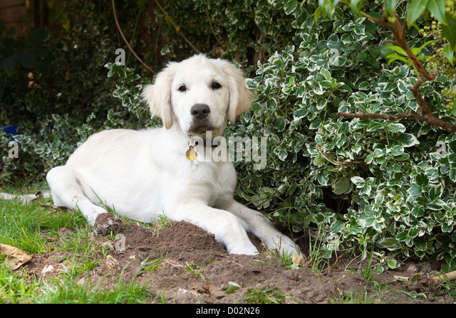 how to stop puppy digging garden