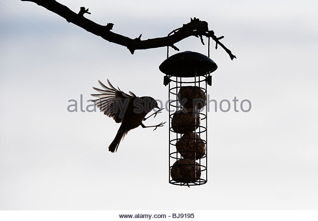 Robin Bird Feeder Stock Photos & Robin Bird Feeder Stock ...