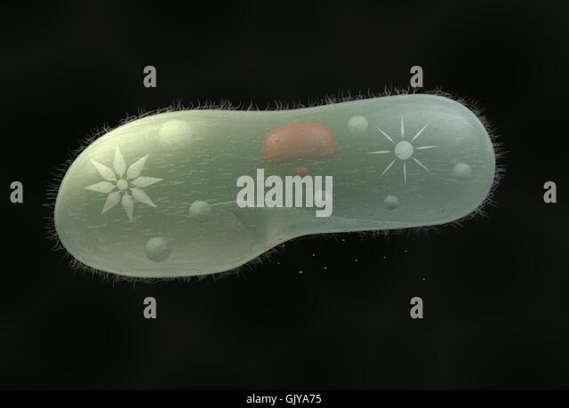 paramecium cell 3d - photo #2