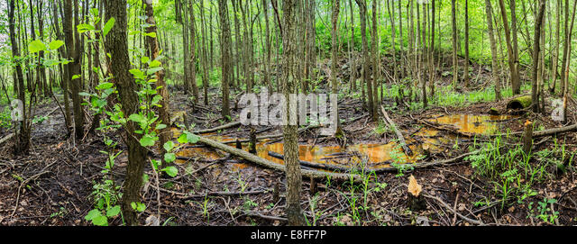 forest pollution Subject: science title: causes of pollution by tracey l churchman, lake charles, louisiana grade level: k - 3 overview: during the past hundred years, due to.