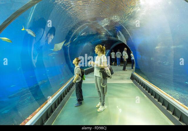 wroclaw zoo wroclaw poland aquarium in afrykarium in wroclaw zoo