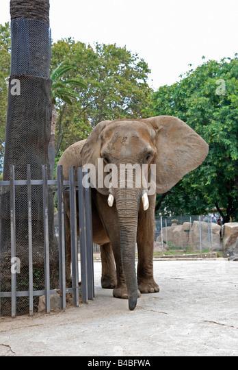 Barcelona zoo stock photos barcelona zoo stock images for Elephant barcellona