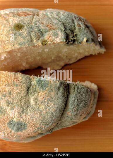 Penicillium Mould Stock Photos & Penicillium Mould Stock ...