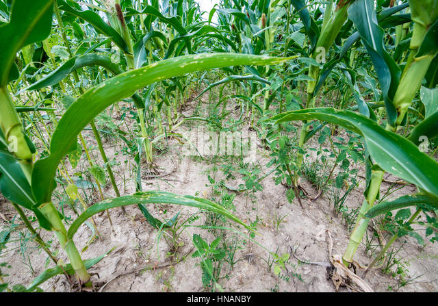Cover Crops Stock Photos & Cover Crops Stock Images - Alamy