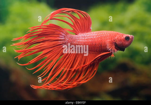 Do not rot stock photos do not rot stock images alamy for Fish tail rot