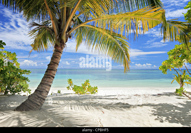 A Scene Of Palm Trees And Sandy Beach On Maldivian Island