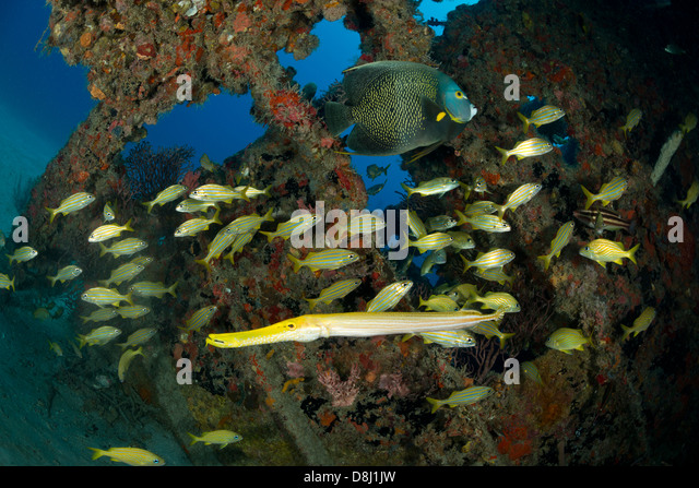Pompano fish stock photos pompano fish stock images alamy for Fish cleaning station near me