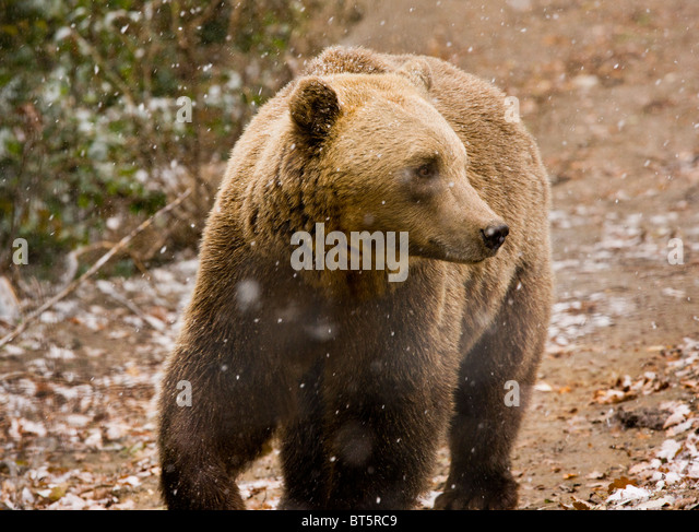 Zarnesti Stock Photos & Zarnesti Stock Images - Alamy