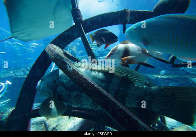 Aquarium and underwater Zoo at Atlantis Palm  Jumeira  Dubai  United Arab  Emirates. Underwater Fish Atlantis Stock Photos   Underwater Fish Atlantis