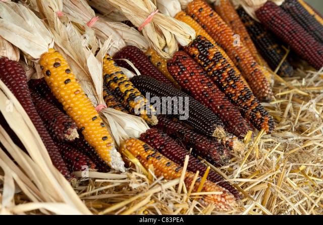 Indian corn texture stock photos amp indian corn texture stock images
