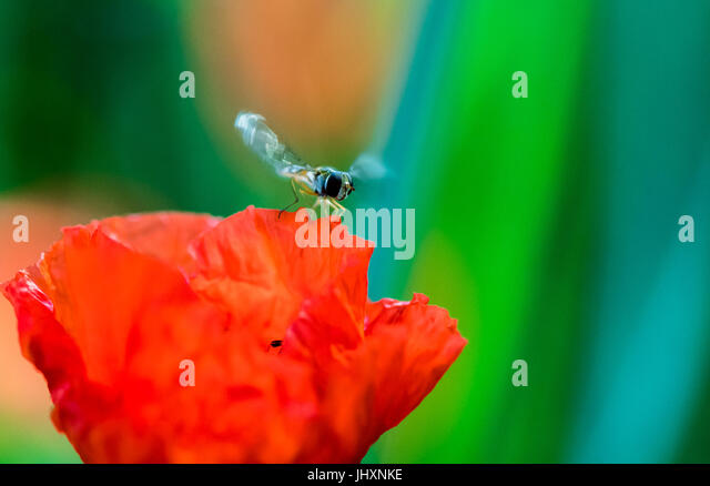 Insects Flying Stock Photos Amp Insects Flying Stock Images