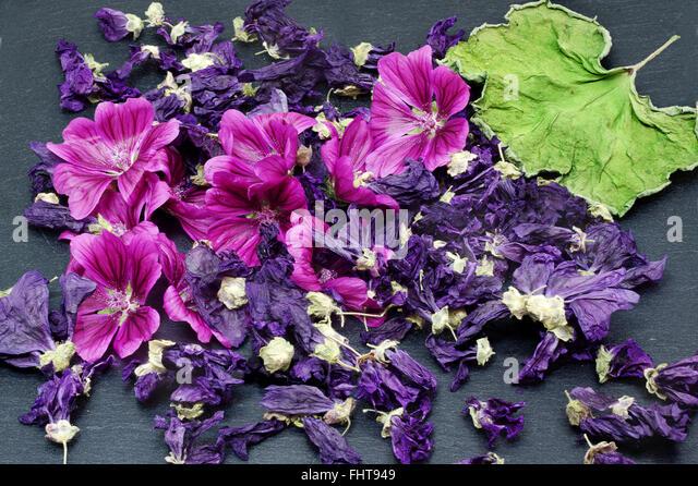 Hollyhock tea stock photos hollyhock tea stock images - Infusion de malva ...