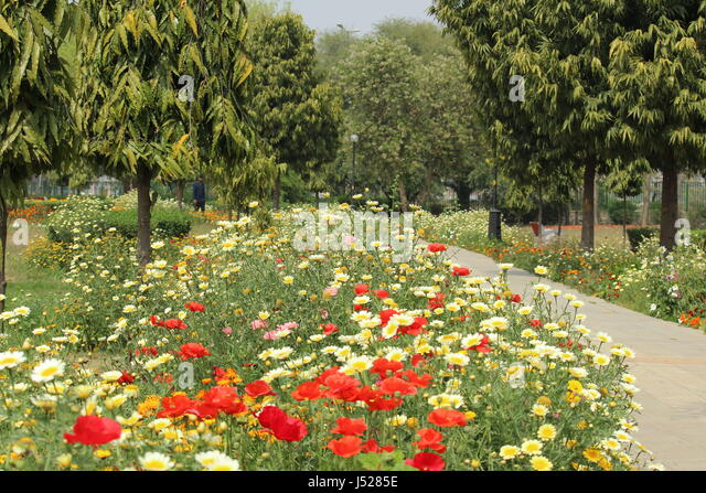 Spring season in india stock photos spring season in india stock colorful spring flowers in japanese park which is also called swarn jayanti park it is mightylinksfo