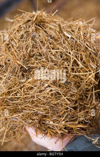 Lake City Feed And Seed >> Forage Animal Feed Stock Photos & Forage Animal Feed Stock Images - Alamy